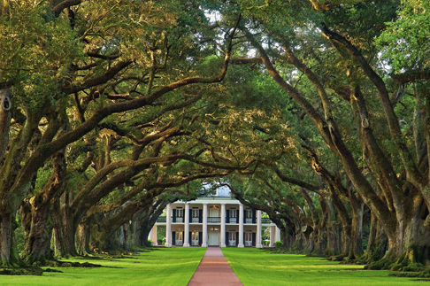 new_orleans_cypress-oak_alley_plantation_view_from